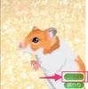 ついに最終回「癒しのハムスター育成ゲーム」を1年間続けたら…広いケージに変更出来た!!!!