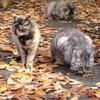 11月20日 亀戸 紅葉絨毯上の猫さま から押上まで