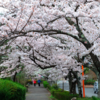 2020.04.04.(土)  4月の花々は満開です&PC買い替えました   COVID-19(4)