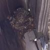 浜松市で雨樋の下に出来た蜂の巣を駆除してきました