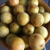 梅の里である自宅で梅ジャム作り。梅の酸味が新鮮、身体に良い事間違い無し!