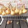 100均で作る収穫後の玉ねぎの保管方法。賃貸でもOK!家庭菜園で取れた野菜のダイソー収納。