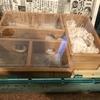 【100均木箱】ルーミィを地下型巣箱に改造【DIY】