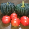 都市近郊農業事業 カボチャ トマト