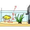 やさしい水槽ろ過メカニズムのお話。水質検査紙とともに。
