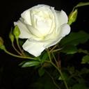 花舗ぽれぽれのブログ