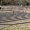 21春ジャガイモの種イモ植えと21春ダイコンの種まき