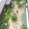 2018年6月の庭
