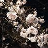 中目黒でサクラを楽しんできた。まだまだ五分咲きというところ。