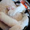 今日の黒猫モモ&白黒猫ナナの動画ー701