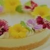 市販のケーキミックスで簡単に作る☆ジャーマンカモミールのレアチーズケーキ