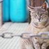 【沼島のネコ】~小さな離島に住むネコ~