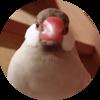 【フツウのコト7】文鳥と私-1-