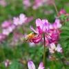 ハチミツ大好き夫婦が養蜂家を訪ねてミツバチの世界を学んできたこと