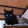 黒猫が不吉だなんてとんでもない! 魅力たっぷりな猫なんだよ!!