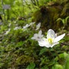 御池岳 新緑に包まれてテント泊① 2009.05.02