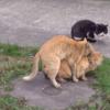 猫になったぼるしちの1日(2日目)