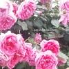 第二弾/宮崎青島ローズガーデン🌹二十四節気「小満」命輝く季節です🌹