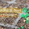 トマトの発芽確認!~発芽条件と日数は??~ベジオタ畑Day4