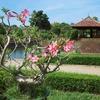 フエ王宮の盆栽園