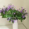花は高くて買えない、と思った時に、お助け無料花材☆ムラサキハナナ