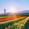 【桜と天の川】富山県朝日町の『春の四重奏』を撮ってきました【絶景】