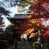 天徳院の紅葉