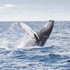 """""""捕鯨の国"""" として知られる日本 まずはクジラという動物についての知識を深めていこう"""