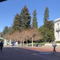 私がカリフォルニア大学バークレー校を選んだ訳
