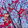 春のリズム
