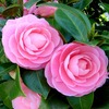早春を代表する花木 Ⅱ