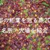 京都の紅葉を巡る旅2008・名所・穴場を紹介〈光悦寺・源光庵・祇王寺〉