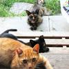 猫ウーマンとお食事