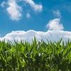 【科学雑記】 植物が成長するためには何が必要?