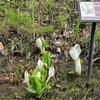 神代植物園の春の花。また11歳児撮影。