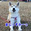 立冬のアリーナツアー 犬の運動会