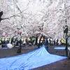 鶴舞公園の桜・お花見2017