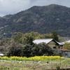 嵯峨にもタイにも春が来た