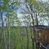 若葉もまぶしい森の窓