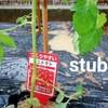 【初心者】ミニトマトを育てます!植え付けまでの作業記録