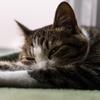 十分睡眠をっているはずなのに、なぜか1日眠い日があるのは