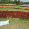 清水公園の花ファンタジアでお花見さんぽ