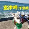 ❝富津岬(後編)❞ 愛犬とおでかけ-千葉県観光🎵  2021年2月23日②