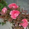 春の開花ラッシュ