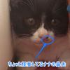 今日の黒猫モモさんの動画ー490