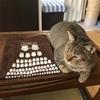 新宿の京王百貨店でやっていたみんなイヌみんなネコという催事で猫活動のチャリティーTシャツを買ったよ