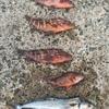 延べ竿で海釣りに行ってきました