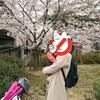 関西の桜の名所‼夙川のお花見情報(*^^*)と、おすすめのランチとお菓子のお店‼
