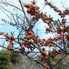 初冬の小幡緑地
