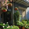 我が家が一番きれいな季節♪